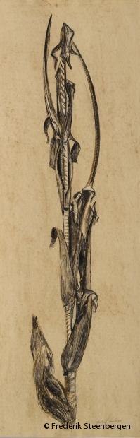"""cornlfower""    99x41cm    drawing ink, bister, chalk -   2005"